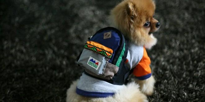 Charlie's Bag - NAVY - 愛犬用リュック(チワワ)