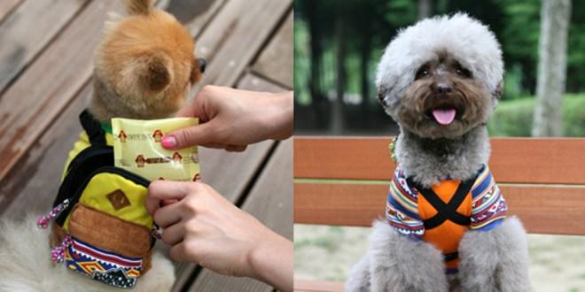 Charlie's Bag - YELLOW - 愛犬用リュック(チワワ)