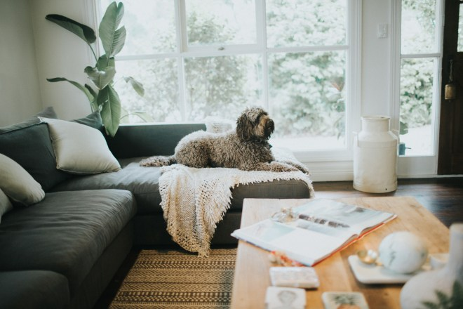 Dogfolk - Photographer from Melbourne