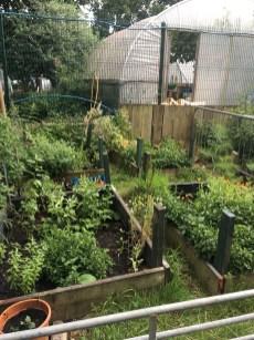 hackney herbal-east-london