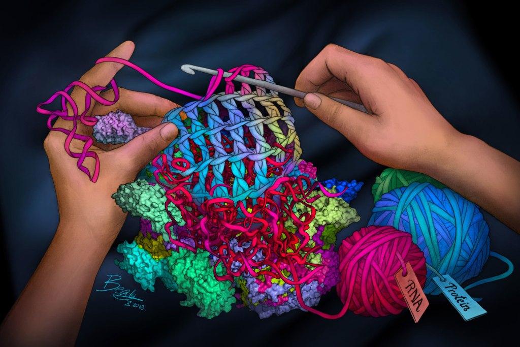 Crocheting the Mitoribosome