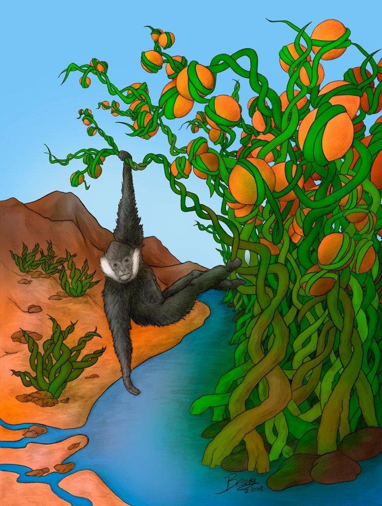 An Epigenetic Jungle