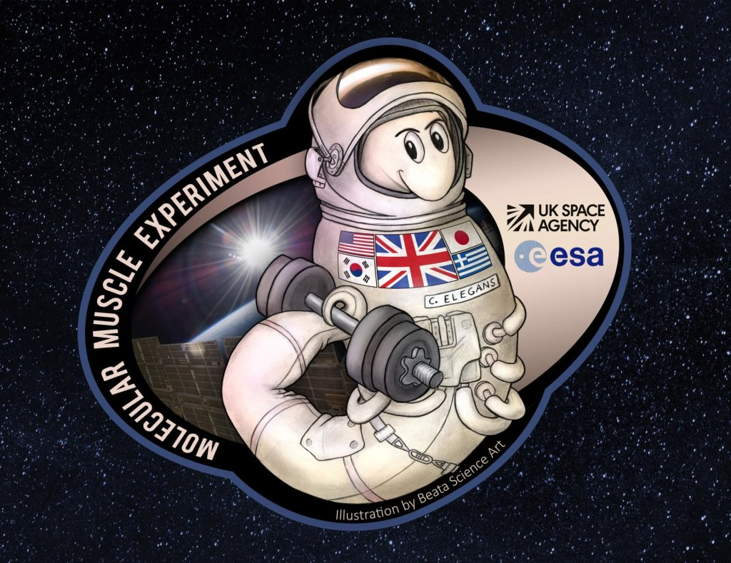 Worms in Space Mission Patch