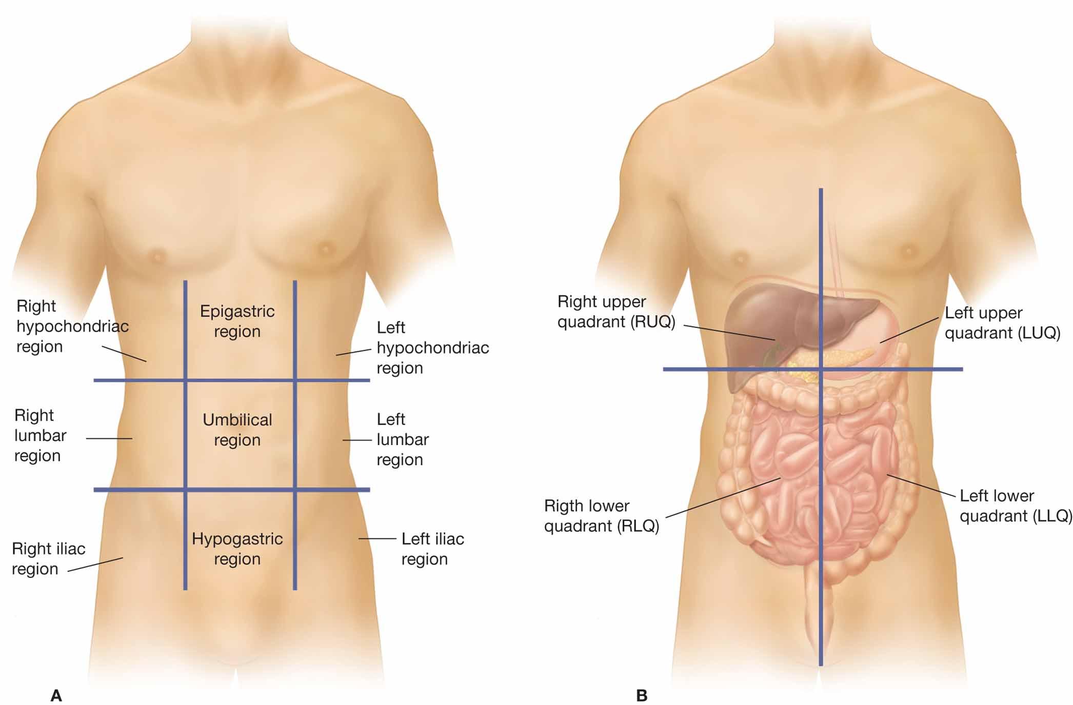 diagram of the four quadrants polo 9n wiring nine regions abdominopelvic cavity beating