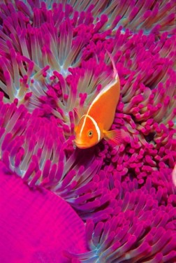 coral-reef-with-orange-fish