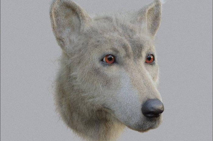 Shjrunken Heads – Neolithic Dog
