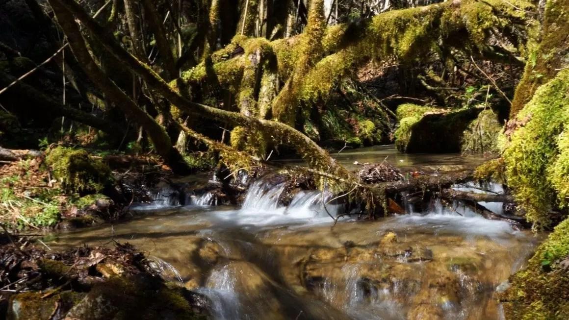 Borjomi forest stream