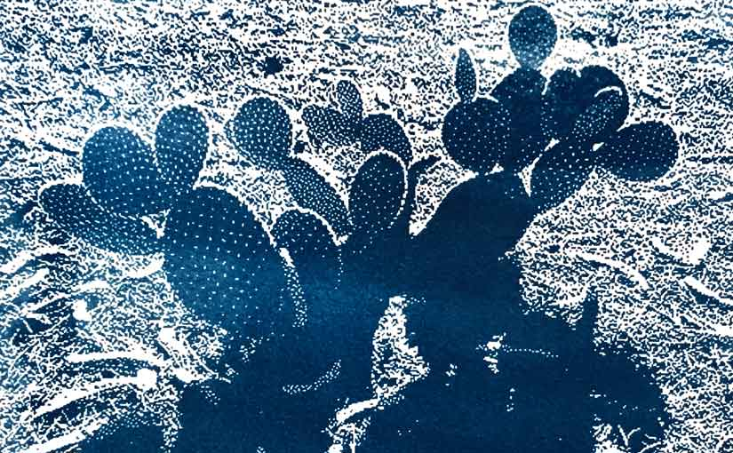cyanotype of cactus, detail