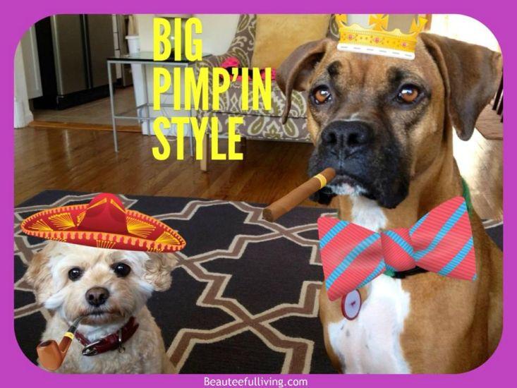 Lola and Roxie big pimpin