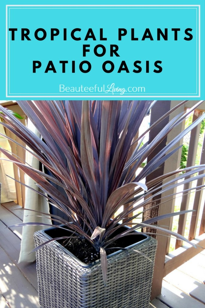Tropical plants for patio oasis - Beauteeful Living