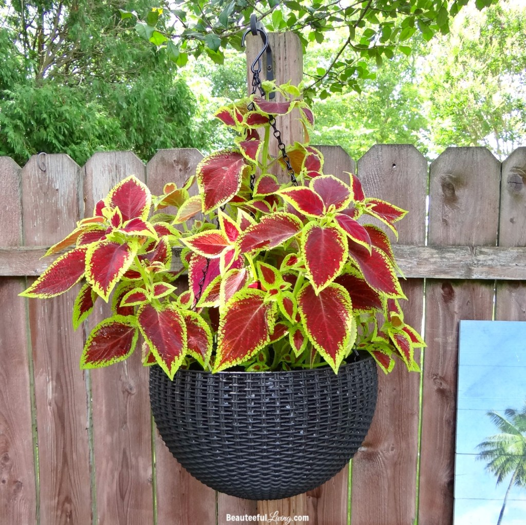 Keter Hanging Wicker Planter - Beauteeful Living