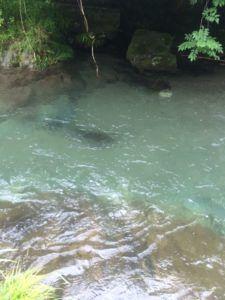 image 57 e1466320278357 225x300 - 埼玉県飯能市の名栗川渓流釣り情報