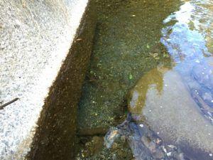 image 2 300x225 - 秩父の中津川で渓流釣り