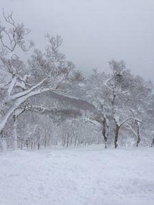 img 2262 225x300 - ニセコの禁止区域「春の滝」で雪崩発生〜ニセコ移住日記㉛〜