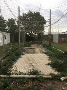 img 3859 225x300 - ハンガリーの野球は今後強くなる?