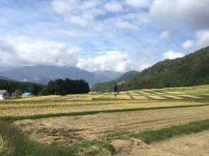 img 4714 300x225 - 新潟県湯沢町で稲刈りに挑戦