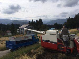 img 4718 300x225 - 新潟県湯沢町で稲刈りに挑戦