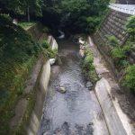 image 51 e1466320440766 - 埼玉県飯能市の名栗川渓流釣り情報