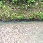 image 55 e1466320351429 - 埼玉県飯能市の名栗川渓流釣り情報