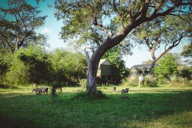 moniquedecaro-nkasalupala-2243