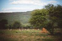 moniquedecaro-okonjima-8093
