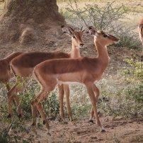 moniquedecaro_namibia-0311