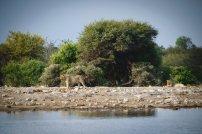 moniquedecaro_namibia-0618