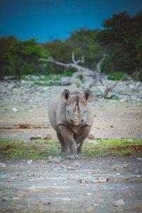 moniquedecaro_namibia-0937
