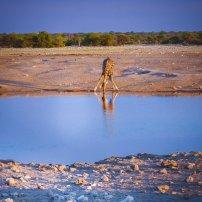 moniquedecaro_namibia-3698