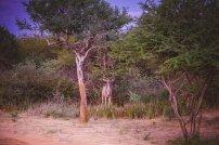 moniquedecaro_namibia-4028