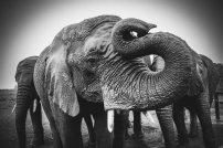 moniquedecaro-knysna-elephant-park