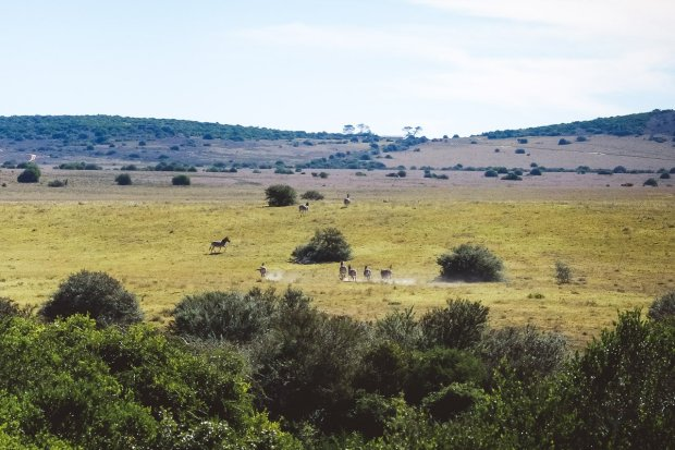 hillsnek_moniquedecaro-4318