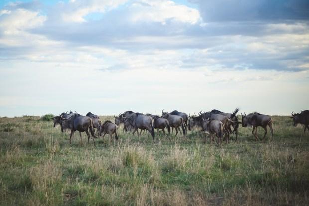 moniquedecaro-mara-bush-camp-kenia-3648