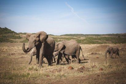 moniquedecaro-mara-bush-camp-kenia-4786