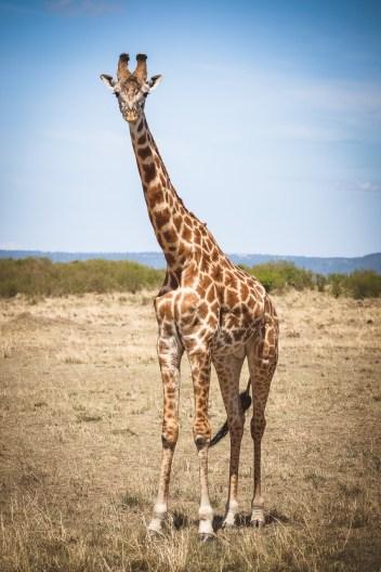 moniquedecaro-mara-bush-camp-kenia-4957