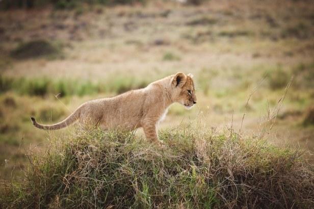 moniquedecaro-mara-bush-camp-kenia-5886