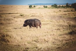 moniquedecaro-mara-bush-camp-kenia-6087