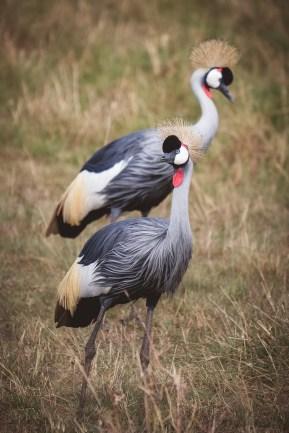 moniquedecaro-mara-bush-camp-kenia-6160