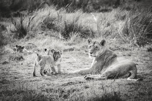 moniquedecaro-mara-bush-camp-kenia-6514