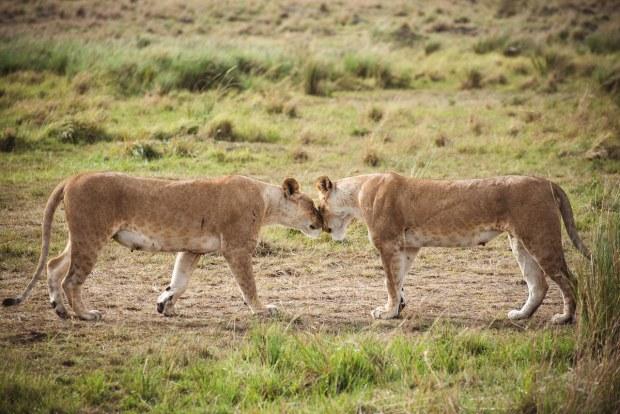 moniquedecaro-mara-bush-camp-kenia-6548
