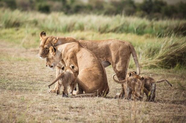 moniquedecaro-mara-bush-camp-kenia-6582