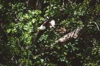 moniquedecaro-shimba-hills-6702