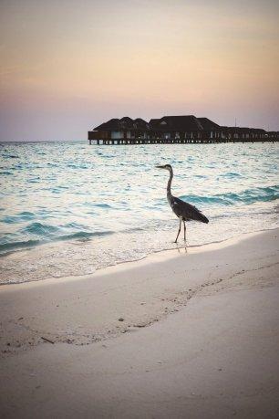 moniquedecaro_velassaru_maldives-3534