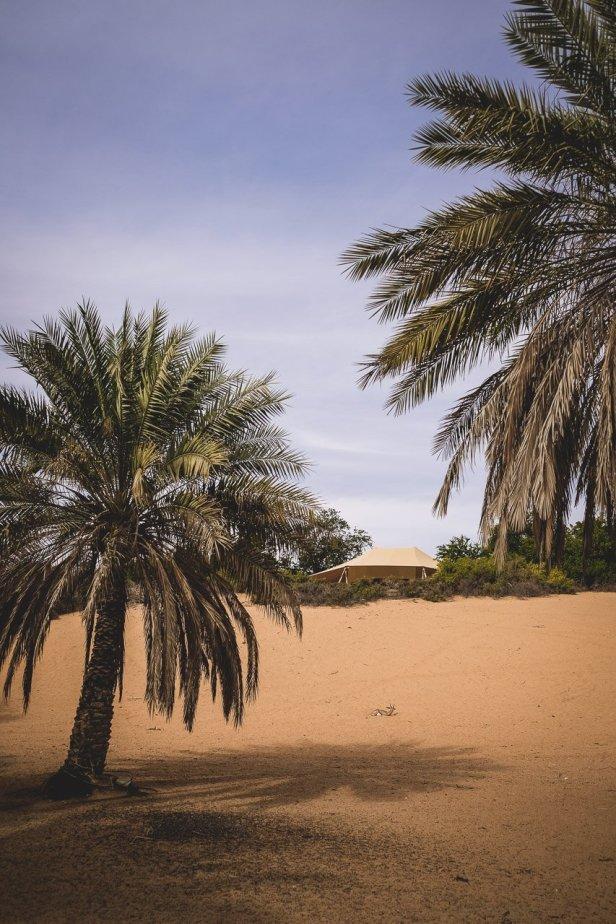 moniquedecaro-al_maha_dubai-3516
