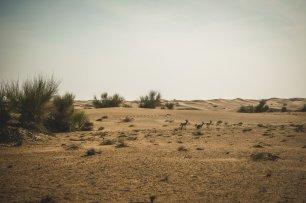 moniquedecaro-al_maha_dubai-3786