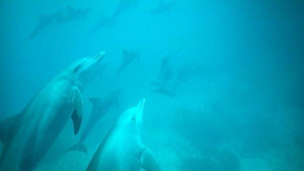 Unser Tipp für Sansibar: Schwimmen mit wilden Delfinen & Blue Safari mit den Locals (+ Videos)