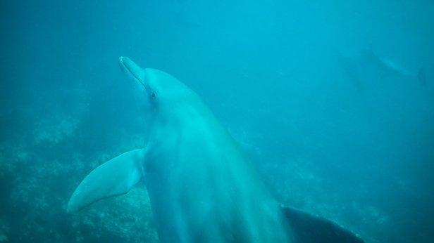 moniquedecaro_zanzibar_dolphin-1