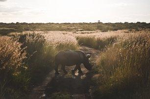 moniquedecaro-rovos-rail-südafrika-6345