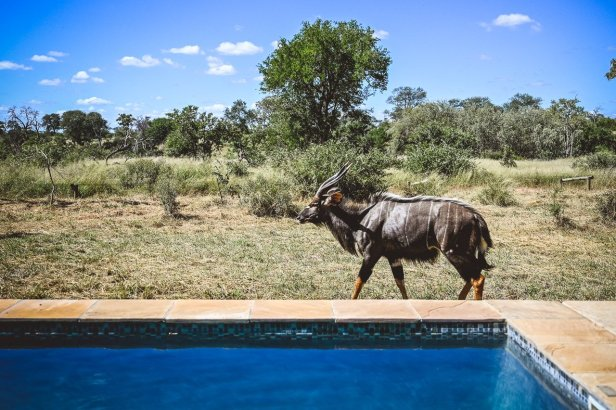 moniquedecaro-kings-camp-south-africa-4274