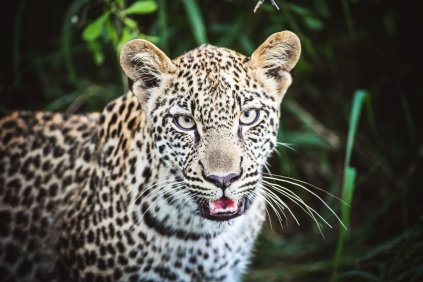 moniquedecaro-kings-camp-south-africa-5